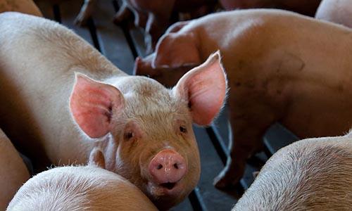 Sortie du documentaire Bacon le film
